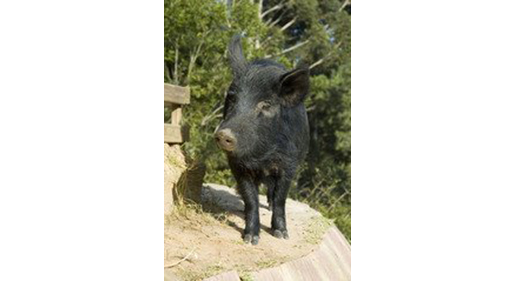 Why a Pig Farm Building Benefits from Insulated Walls